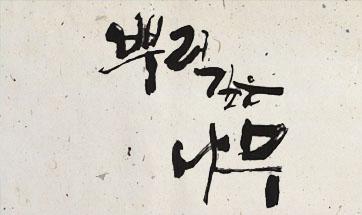 인기리에 방영중인 드라마의 원작소설 『뿌리깊은 나무1』 종합 6위