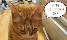 신집사의 '고양이는 해치지 않아요'_#43. 마이 플레이 그라운드!