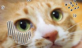 신집사의 '고양이는 해치지 않아요'_#45.꺼낼 일 없는 복수의 발톱