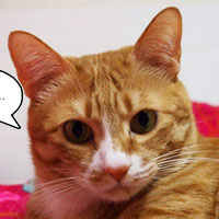 신집사의 '고양이는 해치지 않아요'_#55. 은근 배려남 붕붕이
