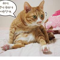 신집사의 '고양이는 해치지 않아요'_#58. 야미 다이어트 성공(?)