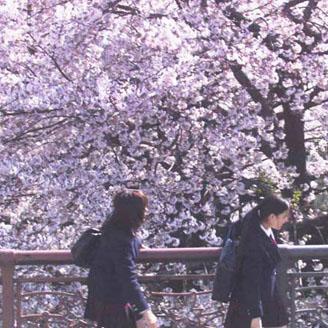 4월이라 봄놀이(1) 벚꽃이 좋아!