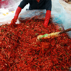 도시男의 주말농장 이야기 15.2013년 김장 - 끝날 것 같지 않은 전쟁