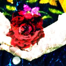 [아담의 장미가 내리면] 16화. 장미