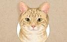 야옹야옹 고양이대백과