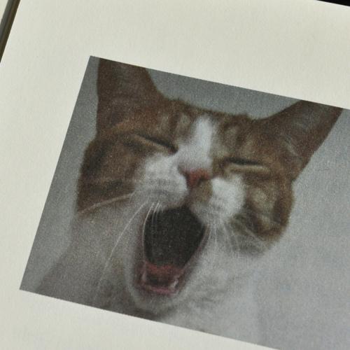 [백영옥의 낭독] 작가들은 왜 하필 고양이를 사랑할까? 『작가와 고양이』