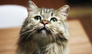 [이벤트] 이기적이어서 더 매력적인, 고양이