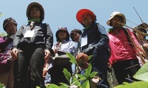 길 위의 인문학, 4계절 내내 꽃이 피는 천리포 수목원을 가다