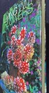 Living with Flowers: Revised Edition Hardcover9780847822393  /사진의 제품   ☞ 서고위치:MV 3  *[구매하시면 품절로 표기 됩니다]