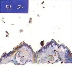 [오아시스] V.A. / 단가(미개봉)