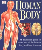 The Human Body #