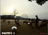 244 ENDLI-x(도모토 쯔요시)/Kinki Kids(킨키 키즈)  I And愛(초회한정반B)