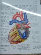 우리몸의 해부학 조직학 병리학