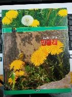 봄동산의 난쟁이 꽃 민들레