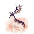 DIY 명화그리기키트 - 고요한 사슴 40x50cm (물감2배, 컬러캔버스, 명화, 동물, 사슴, 고요)