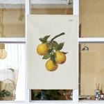 과일 수채화 포스터 / 가리개 커튼