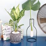 사파이어 엔틱 화분 공기정화식물