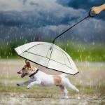 강아지우산 애견 산책 리드줄 투명 거꾸로우산 우비