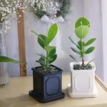 몰딩 화분 크루시아 공기정화식물