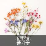 압화 꽃모음 - 줄기꽃