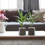 루체 화분 아레카야자 공기정화식물
