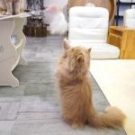 윈코 코펫 고양이 3단 고급낚시대  장난감
