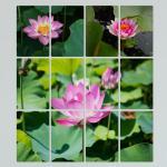 pf082-멀티액자_부귀를부르는연꽃