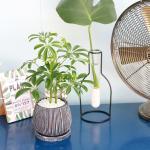 홍콩 야자 엔틱 화분 공기정화식물