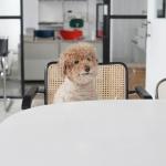 강아지옷 겨울옷 레인보우 하이넥 스웨터(연베이지)