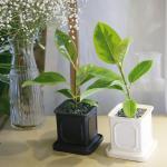 몰딩 화분 뱅갈고무나무 공기정화식물