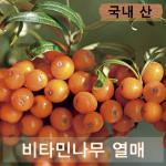 비타민나무 열매