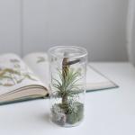 [디어먼트] 틸란드시아 이끼 테라리움 공기정화식물