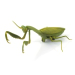 [적외선] 자이언트 시리즈 사마귀 RC (CBT889142) 곤충rc