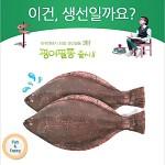 ★무료배송 [피쉬앤팬시] 생선필통 광어필통