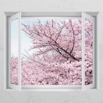 cj843-핑크빛벚꽃_창문그림액자