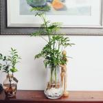 거실인테리어화분 홍콩야자 앤틱 롱쉐이드 수경식물