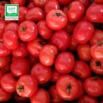 달향토마토 베이비 2kg / GAP인증토마토
