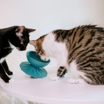 몬도미오펫 팽이식기 고양이식기 식탁 Blue