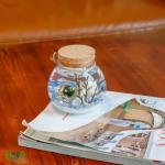수경식물 반려식물 행운목 마리모 DIY 선물세트