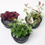키우기 쉬운 실내공기정화식물 시루화분 시리즈