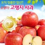 [경북안동] 고냉지 빨강 꼬맹이 꿀사과 1kg/6~9과