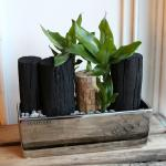 천연가습기 고급화기에 담긴 공기정화식물과 숯(L)