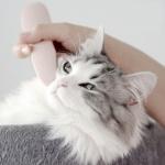 Groomy정품 고양이 마사지 브러쉬 빗 반려동물 장난감