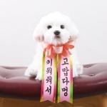 갓샵 인간화환 당일발송ver 강아지형 소형 졸업결혼식