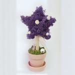 [공기정화식물] 스칸디아모스 별나무 J_78