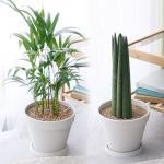 중형 화분 모음 공기정화식물 8종