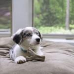 베네본 강아지 장난감 - 위시본, 덴탈츄, 메이플스틱