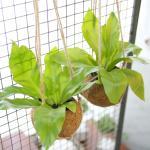 코코팟 아비스 공기정화식물