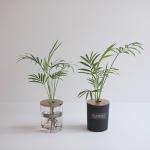 [디어먼트]테이블야자 잎 수경식물 골드커버 화병세트