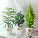 세가지 매력의 리얼 사철나무 3종 (중형) [전국택배]